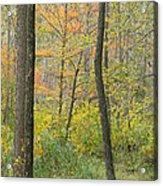 Woodland Interior Acrylic Print