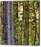 Woodland Morning Acrylic Print