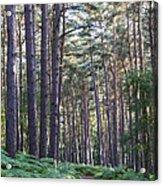 Woodland Path Acrylic Print by David Isaacson