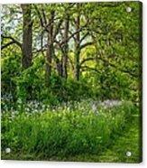 Woodland Phlox   Acrylic Print