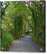 Woodland Road Acrylic Print