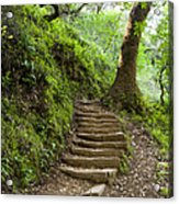 Woodland Stairs Acrylic Print