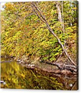 Woodland Stream Early Autumn Montgomery County Pennsylvania Acrylic Print