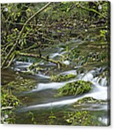 Woodland Stream - Monk's Dale Acrylic Print