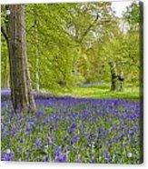 Woodland Walk In Blue Acrylic Print