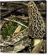Woodland Yummy Acrylic Print