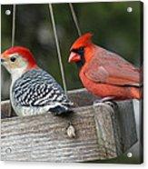 Woodpecker And Cardinal Acrylic Print by John Kunze