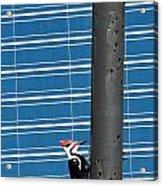 Woodpecker Column Acrylic Print