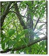 Woodpecker Tree Art Acrylic Print