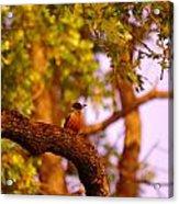 Woodpeckers Of Fort Simcoe Acrylic Print