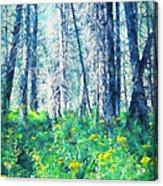 Woods 1 Acrylic Print