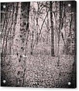 Woods Darkly Acrylic Print