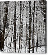 Woods On A Snowy Night Acrylic Print by Penny Hunt