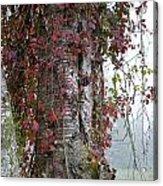 Woodvine Acrylic Print