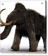 Wooly Mammoth Acrylic Print