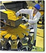 Worker With Pasta Packing Machine Acrylic Print by Science Photo Library
