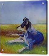 Working Man's Dog Acrylic Print by Sandra Sengstock-Miller