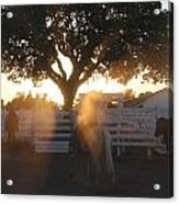 Working The Ranch Acrylic Print