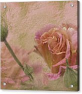 World Peace Roses With Texture Acrylic Print