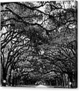 Wormsloe Plantation B-w Acrylic Print