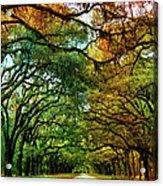 Wormsloe Plantation Acrylic Print