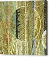 Woven Branches Acrylic Print