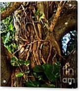 Wrapped In Vines Acrylic Print by Claudette Bujold-Poirier