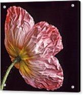 Wrinkled Rose Acrylic Print