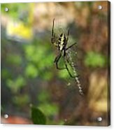 Writing Spider Acrylic Print by Nelson Watkins