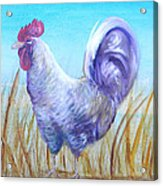 Wyandotte Rooster Acrylic Print