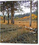 Wyoming Gold Acrylic Print