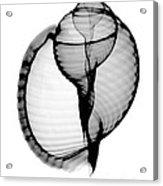X-ray Of Scotch Bonnet Acrylic Print