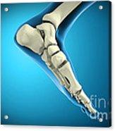 X-ray View Of Bones In Human Foot Acrylic Print