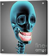 X-ray View Of Human Skeleton Showing Acrylic Print by Stocktrek Images