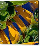 Xunflower Acrylic Print
