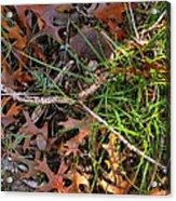 Y-comp 2009 Acrylic Print