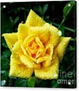Y-rose Acrylic Print