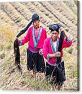 Yao Ethnic Minority Women On Rice Terrace Acrylic Print