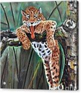 Yawning Leopard Acrylic Print