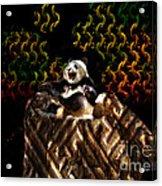 Yawning Panda  Acrylic Print