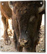 Waco Texas Buffalo Nose Drip Acrylic Print