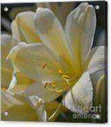 Yellow 8713 Acrylic Print