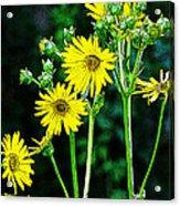 Yellow Achieve Acrylic Print