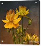 Yellow Aged Floral Acrylic Print