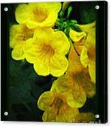 Yellow - Amarillo - Jaune Acrylic Print