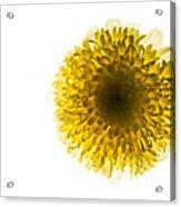 Yellow Acrylic Print by Amr Miqdadi
