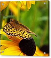 Yellow And Browns Acrylic Print