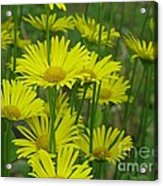 Yellow And Green Acrylic Print