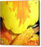 Yellow And Orange Petals Illuminated Acrylic Print