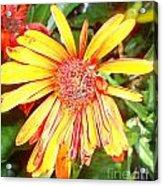 Floral Grunge Acrylic Print